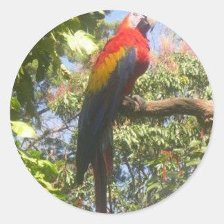 Costa Rica Macaw Classic Round Sticker