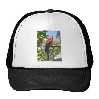 Costa Rica Macaw Hat