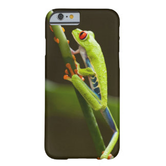 Costa Rica, Monteverde, Red-Eyed Tree Frog Barely There iPhone 6 Case