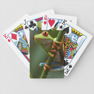 Costa Rica, Monteverde, Red-Eyed Tree Frog Bicycle Playing Cards