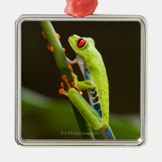 Costa Rica, Monteverde, Red-Eyed Tree Frog Christmas Ornament