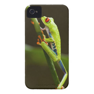 Costa Rica, Monteverde, Red-Eyed Tree Frog iPhone 4 Covers