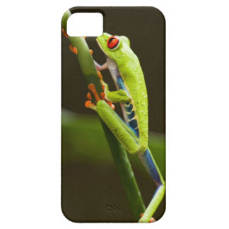 Costa Rica, Monteverde, Red-Eyed Tree Frog iPhone 5 Covers