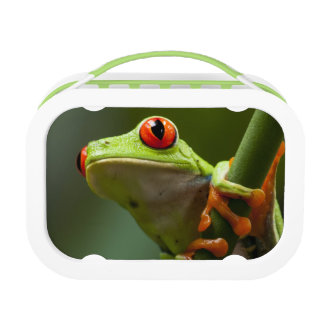 Costa Rica, Monteverde, Red-Eyed Tree Frog Lunch Box