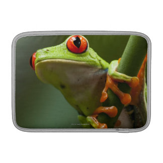 Costa Rica, Monteverde, Red-Eyed Tree Frog MacBook Sleeve