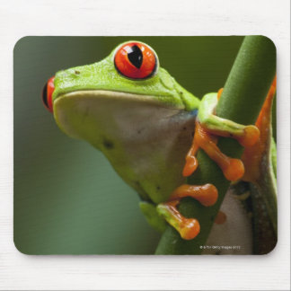 Costa Rica, Monteverde, Red-Eyed Tree Frog Mouse Pad
