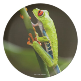Costa Rica, Monteverde, Red-Eyed Tree Frog Plate