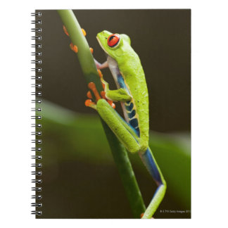 Costa Rica, Monteverde, Red-Eyed Tree Frog Spiral Note Books