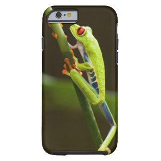 Costa Rica, Monteverde, Red-Eyed Tree Frog Tough iPhone 6 Case