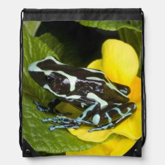 Costa Rica, Osa Peninsula. Close-up of poison Drawstring Bag