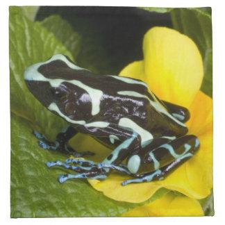 Costa Rica, Osa Peninsula. Close-up of poison Napkins