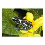 Costa Rica, Osa Peninsula. Close-up of poison Photographic Print