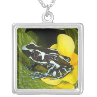 Costa Rica, Osa Peninsula. Close-up of poison Silver Plated Necklace
