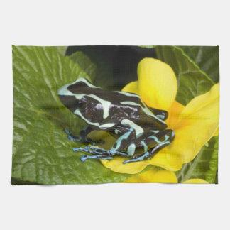 Costa Rica, Osa Peninsula. Close-up of poison Tea Towel