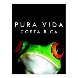 Costa Rica Pura Vida Tree Frog Postcard