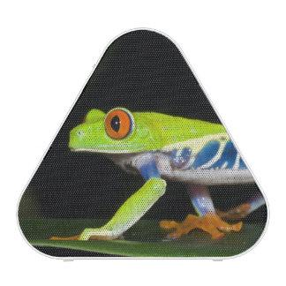 Costa Rica, Red-eyed Tree Frog (Agalychnis