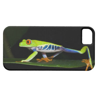 Costa Rica, Red-eyed Tree Frog (Agalychnis Barely There iPhone 5 Case