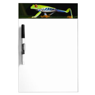 Costa Rica, Red-eyed Tree Frog (Agalychnis Dry Erase Board