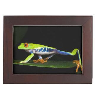 Costa Rica, Red-eyed Tree Frog (Agalychnis Keepsake Box