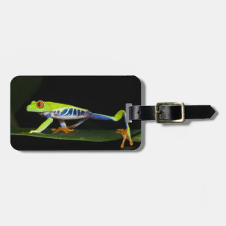Costa Rica, Red-eyed Tree Frog (Agalychnis Luggage Tag