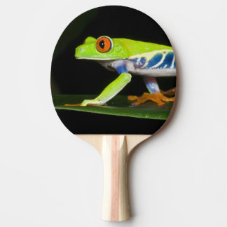 Costa Rica, Red-eyed Tree Frog (Agalychnis Ping Pong Paddle