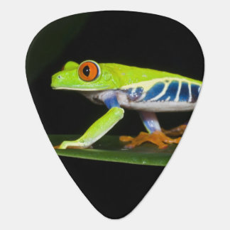 Costa Rica, Red-eyed Tree Frog (Agalychnis Plectrum