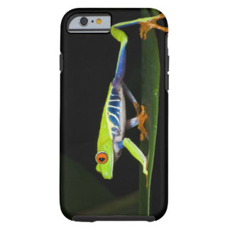Costa Rica, Red-eyed Tree Frog (Agalychnis Tough iPhone 6 Case