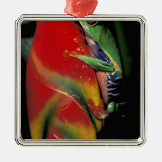 Costa Rica, Red Eyed Tree Frog. Christmas Ornament
