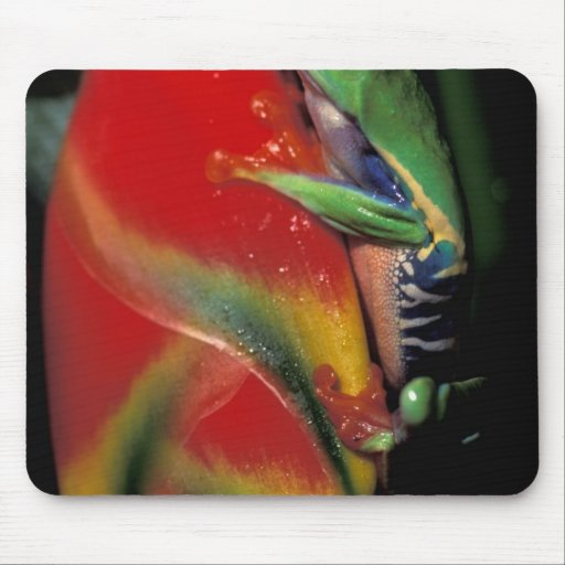 Costa Rica, Red Eyed Tree Frog. Mouse Pads