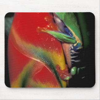 Costa Rica Red Eyed Tree Frog Mouse Pads