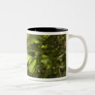 Costa Rica. Striped Palm Viper Bothriechis Two-Tone Coffee Mug