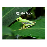 Costa Rica Tree Frog Postcards