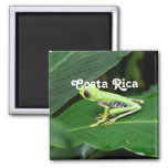 Costa Rica Tree Frog Square Magnet