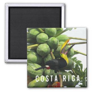 Costa Rica Tropical Toucan Souvenir Magnet