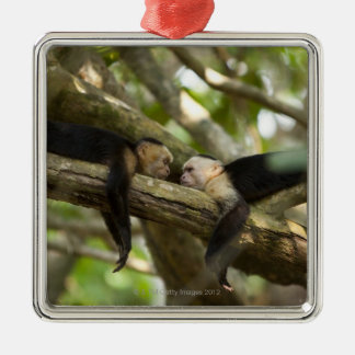 Costa Rica, Two monkeys resting on tree, lying Christmas Ornament