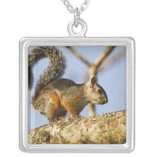 Costa Rica. Variegated squirrel Sciurus Silver Plated Necklace