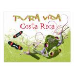 Costa Rican Pura Vida Tree Frog Postcard