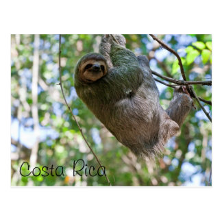 Costa Rican sloth Postcard