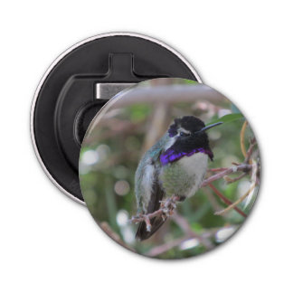Costa's Hummingbird Bottle Opener