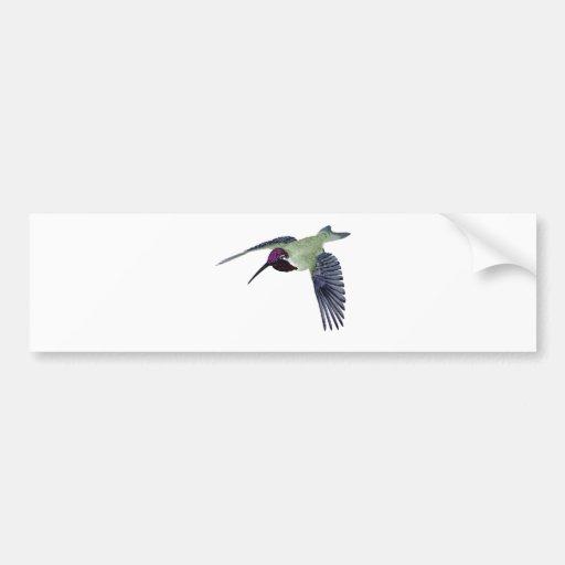 Costas Hummingbird Bumper Sticker