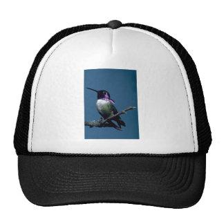 Costa's hummingbird, Calypte costae, Sacremento, U Trucker Hats