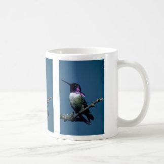 Costa's hummingbird, Calypte costae, Sacremento, U Coffee Mugs