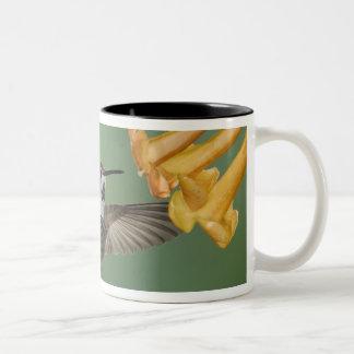 Costa's Hummingbird, Calypte costae, young Coffee Mugs