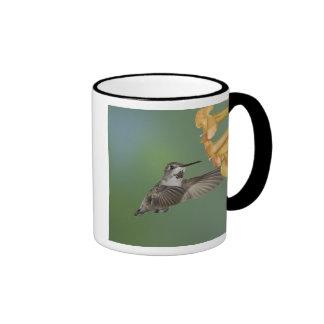 Costa's Hummingbird, Calypte costae, young Coffee Mug