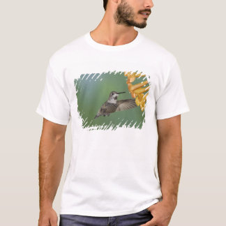 Costa's Hummingbird, Calypte costae, young T-Shirt