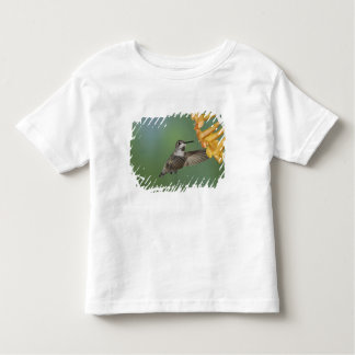 Costa's Hummingbird, Calypte costae, young Tshirt