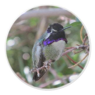 Costa's Hummingbird Ceramic Knob