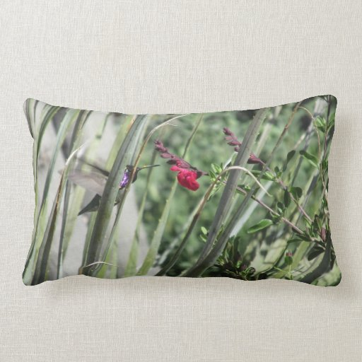 Costa's Hummingbird Pillows
