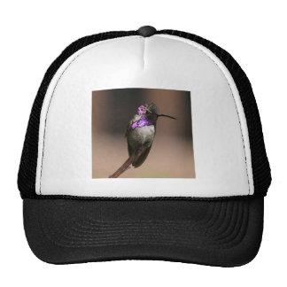Costa's Hummingbird Hat