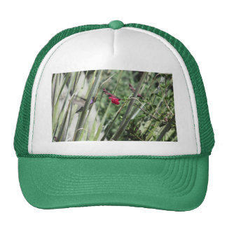 Costa's Hummingbird Trucker Hats
